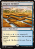 CULTIVOS IRRIGADOS / IRRIGATED FARMLAND (AMONKHET)